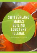 Switzerland makes boiling lobsters illegal